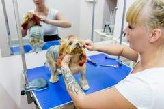 Ansa en hund fotografering för bildbyråer