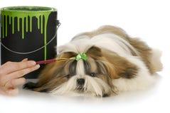 ansa för hund Arkivfoton
