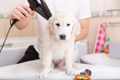 Ansa för man av hans hund hemma royaltyfri bild