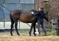 Ansa hennes häst Arkivbild