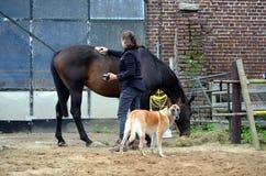 Ansa hennes häst Royaltyfri Foto