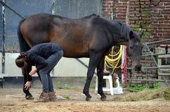 Ansa hennes häst Royaltyfri Bild