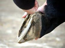 Ansa hennes häst Royaltyfria Foton