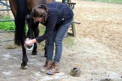 Ansa hennes häst Arkivbilder