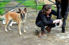 Ansa hennes häst Royaltyfri Fotografi