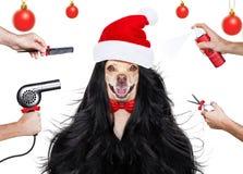 Ansa hunden på frisörerna arkivfoton