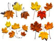 Ansammlung Blätter Stockbild