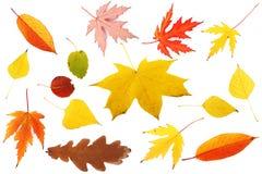 Ansammlung bunte Blätter Stockfotografie