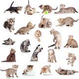 Ansammlung der lustigen spielerischen Katze auf Weiß Lizenzfreie Stockfotos