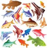 Ansammlung Farbenaquarierfische. Stockbild