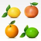 Ansammlung Früchte Stockfotos