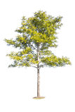 Ansammlung getrennte Bäume Lizenzfreie Stockbilder