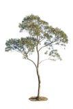 Ansammlung getrennte Bäume Stockfoto