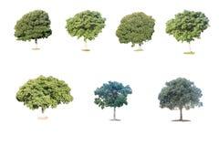 Ansammlung getrennte Bäume Lizenzfreie Stockfotos
