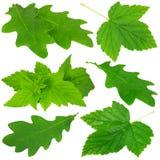 Ansammlung grüne Blätter Lizenzfreie Stockbilder