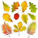 Ansammlung Herbstblätter Lizenzfreie Stockbilder