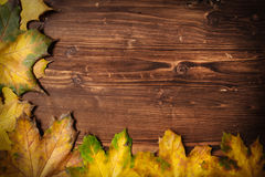 Ansammlung Herbstblätter Lizenzfreie Stockfotos