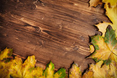 Ansammlung Herbstblätter Stockfoto