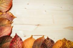 Ansammlung Herbstblätter Stockfotografie