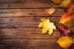 Ansammlung Herbstblätter Stockfotos