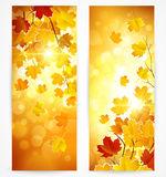 Ansammlung Herbstfahnen Lizenzfreie Stockfotos