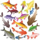 Ansammlung mehrfarbige Fische Stockbild