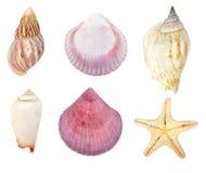 Ansammlung Seashells Lizenzfreies Stockfoto