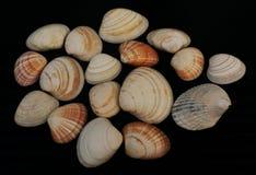 Ansammlung Seashells stockbild