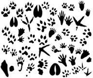 Ansammlung Tier- und Vogelspuren vektor abbildung