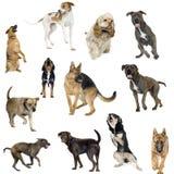 Ansammlung von 12 Hunden in den verschiedenen Stellungen Stockfoto
