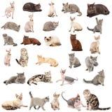 Ansammlung von Katzen Lizenzfreies Stockfoto