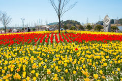 ANSAN, KOREA - 25. APRIL: Daebudo-Tulpen-Festival Stockbild