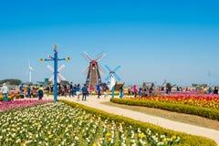 ANSAN KOREA, KWIECIEŃ, - 25: Daebudo tulipanów festiwal Zdjęcie Royalty Free