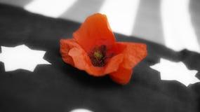 Anschlagtafel getrennt auf Weiß Mohnblume auf Schwarzweiss-Flagge stockbild