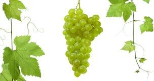 ansd葡萄葡萄叶子 免版税库存图片