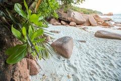 Anse拉齐奥在普拉兰岛,塞舌尔群岛的日出片刻 免版税库存图片