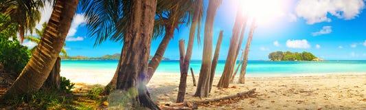 anse海滩黎明印第安海岛拉齐奥海洋全景praslin塞舌尔群岛热带视图 普拉兰岛海岛,塞舌尔群岛,印度洋 万维网横幅 免版税图库摄影