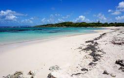 Anse àl'Eau i Guadeloupe Arkivfoton