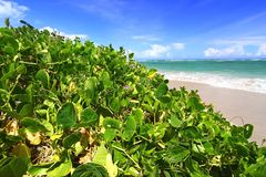 anse beach de Λουκία sables Άγιος Στοκ Φωτογραφία