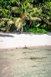 Anse-Cocos Stockbilder