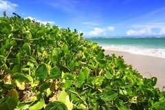 Anse de Sables Beach - Saint Lucia Stock Photography