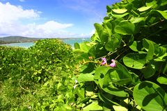 Anse de Sables Beach - Saint Lucia Royalty Free Stock Images