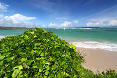 Anse DE Sables Beach - St Lucia royalty-vrije stock afbeeldingen