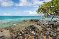 Anse Figuier em Martinica Imagens de Stock