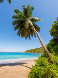 Anse Major Beach, Mahe Island, Seychelles Royalty Free Stock Photo