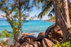 Anse Major Nature trail, Seychelles Royalty Free Stock Photo