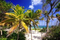 Anse Michel Beach près de chevalier de chapeau - Sainte Anne - Martinique images stock