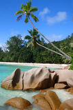 Anse Severe. Palm beach at La Digue, Seychelles Royalty Free Stock Images