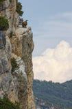 Anseende för Griffon gam på klippan, Drome provencale, Frankrike royaltyfria foton