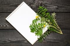 Anserina y cuaderno del Potentilla del Silverweed Fotos de archivo